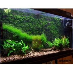 Абонентское обслуживание аквариума от 500 литров