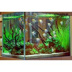 Оформление аквариума до 200 литров