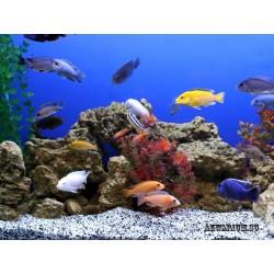 Оформление аквариума от 200 до 500 литров