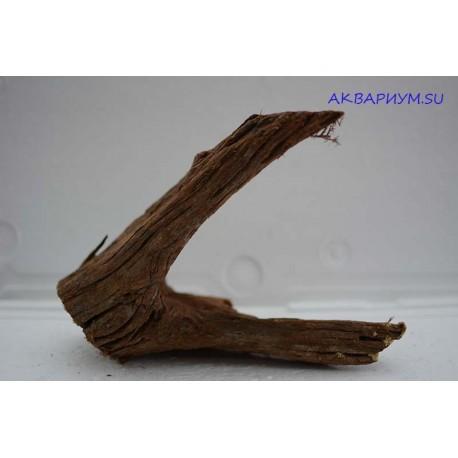 Коряга мангровая