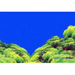 Фон односторонний 60см - Ландшафт из мха
