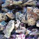 Камни живые - Индонезия