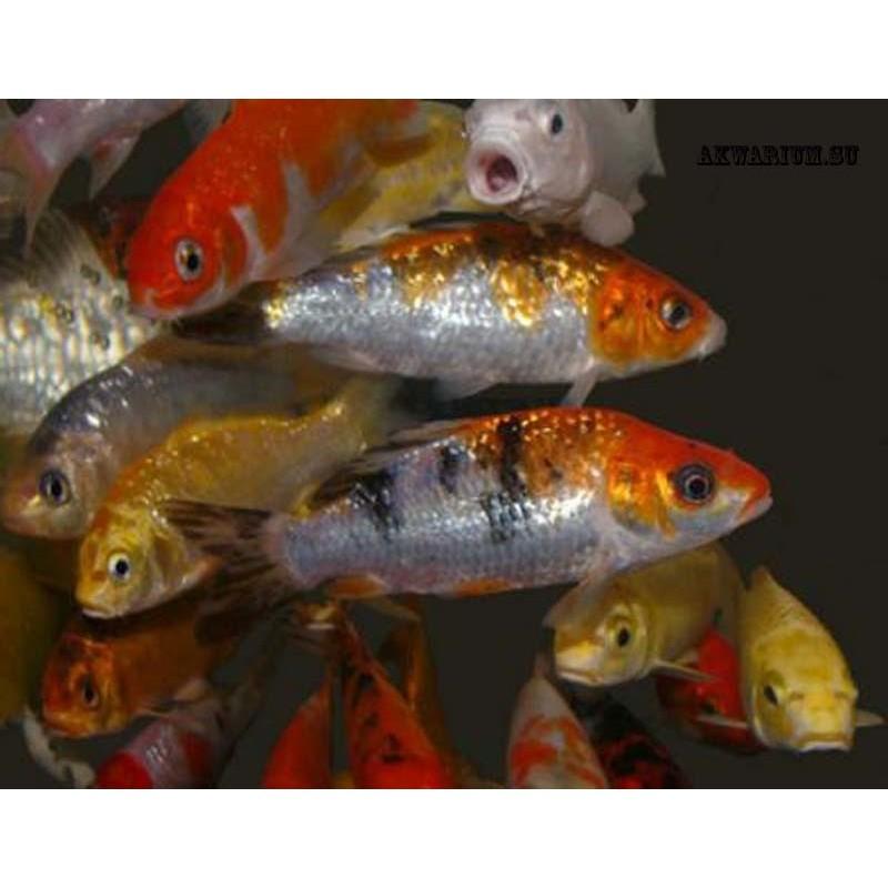 Охладители для аквариума